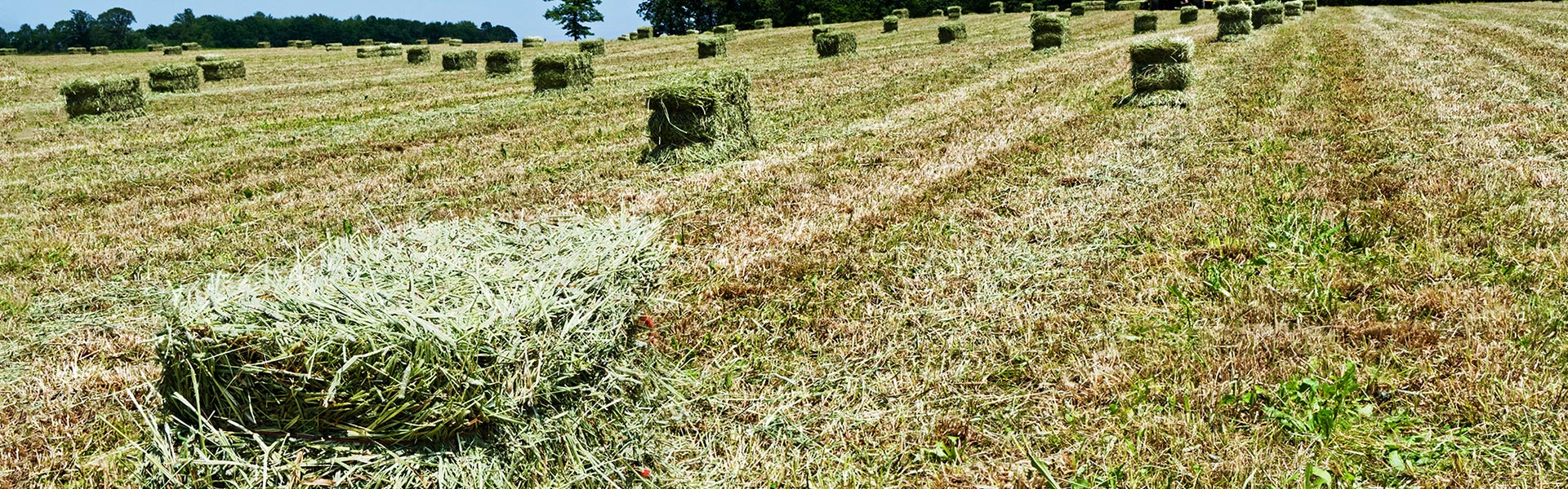 Quality oaten hay for sale